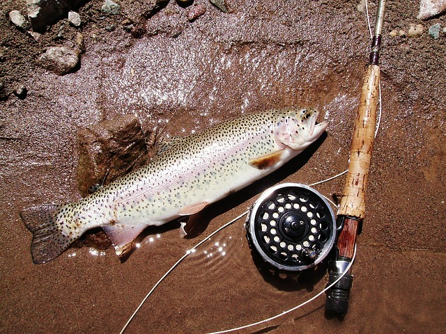 Trout Fishing Tactics and Tips
